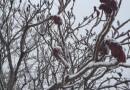 清平乐·飘雪