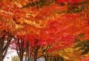 加拿大豪邁開拓史(01)美麗的山川