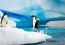 北极来的企鹅