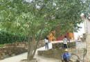 榆树下的童年